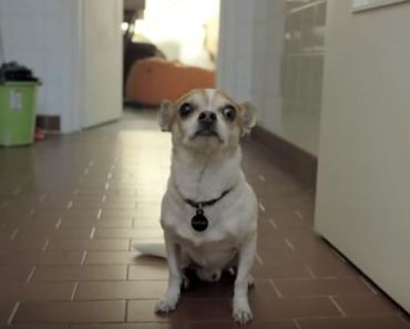 Chihuahua Hates Bath Time in A Big Way