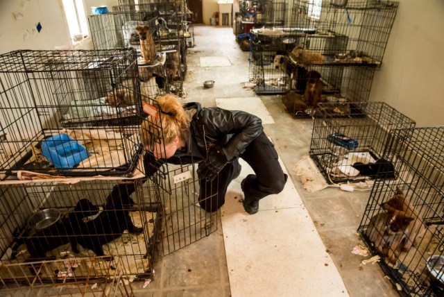 dogs being kept in horrible conditions