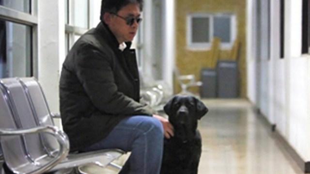 blind service dog