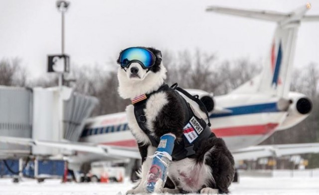 dog with the coolest job ever