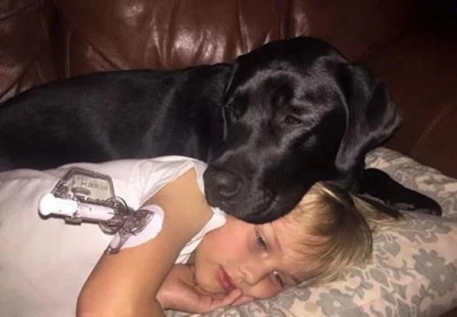 life saving dog