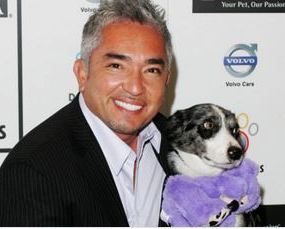 Cesar Milan Cleared of Wrongdoing After Setting French Bulldog on Pig