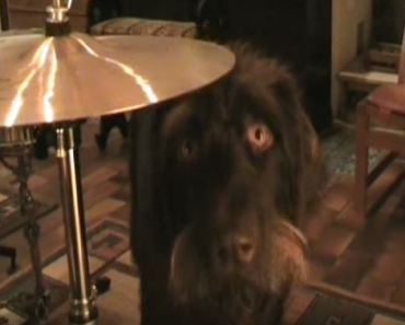 Dog Uses Drums to Get His Owner's Attention