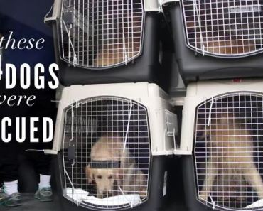 Watch This Amazing Video of Dogs Feeling Love for the Very First Time
