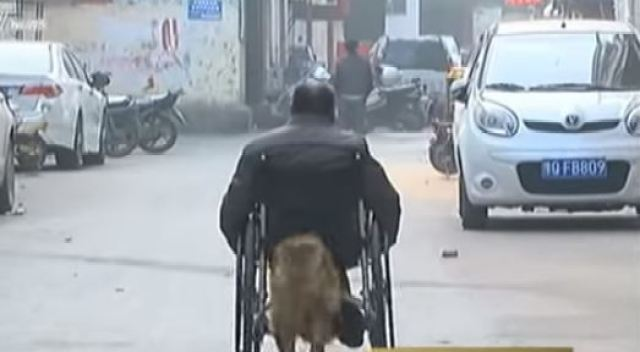 wheelchair dog