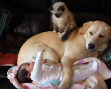 A Puppy, A Kitten and A Baby All Together in One Beautiful Photo