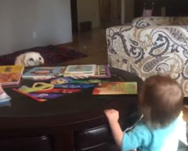 Watch This Dog Play Peek-A-Boo With This Sweet Baby