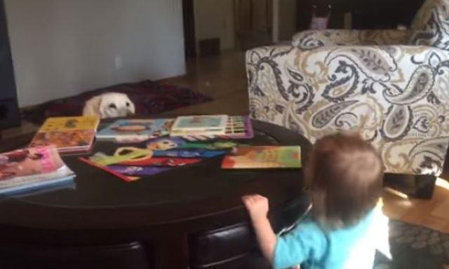 dog and baby peek-a-boo