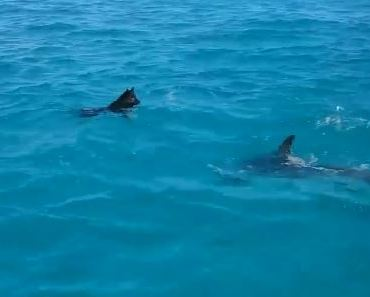 Watch This Dog Swim and Play with A Dolphin in Greece