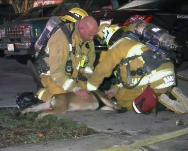 Watch Firemen Save A Dog's Life After Finding Him Unconscious in A Fire