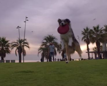 This Emotional Video Shows Just How Beneficial Dogs Are to Humans