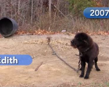 Dog Chained Up for Nine Years Finally Has A Loving Home