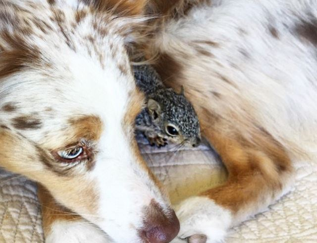 squirrel and pup