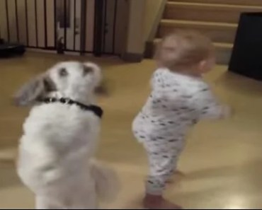 Baby Learns to Do A Dog's Trick for A Treat