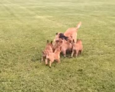 Adorable Puppy Playtime with Mom Will Melt Your Heart