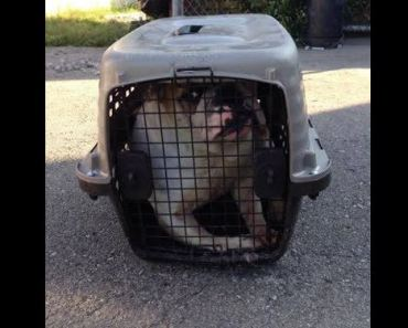 Horrible Person Abandons Large Dog in Small Crate