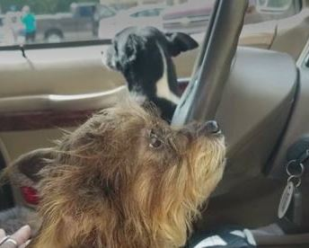 Woman Leaves Dogs in Car and They Crash into a Store