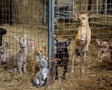 Rescue Group Saves Dozens of Dogs in Tennessee