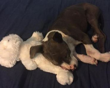 Injured Puppy About to Be Put Down Gets A Second Chance at Life
