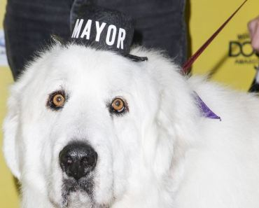 Dog Elected Mayor of Town in Minnesota