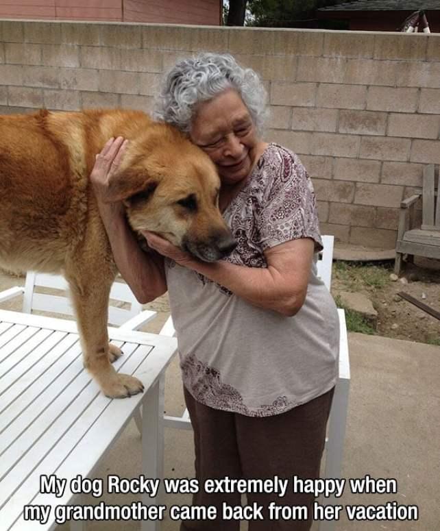 Dogs Love Us 13