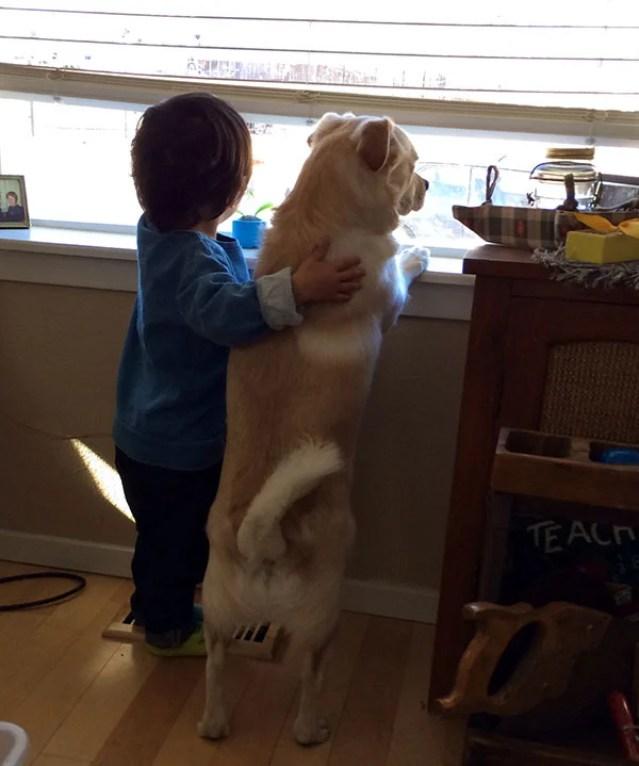 Dogs Love Us 4