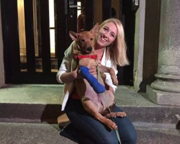 Dog Escapes Owner in NYC and Survives Being Hit By A Truck