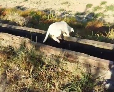 Abandoned and Homeless Dog is So Happy To Have Been Found
