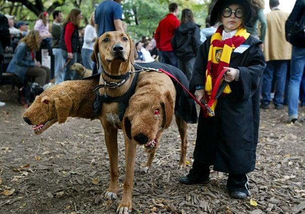 halloween-dog-costumes-3