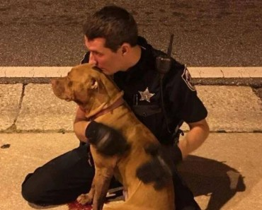 Cop Comforts Pit Bulls Who were Abandoned on the Side of the Road