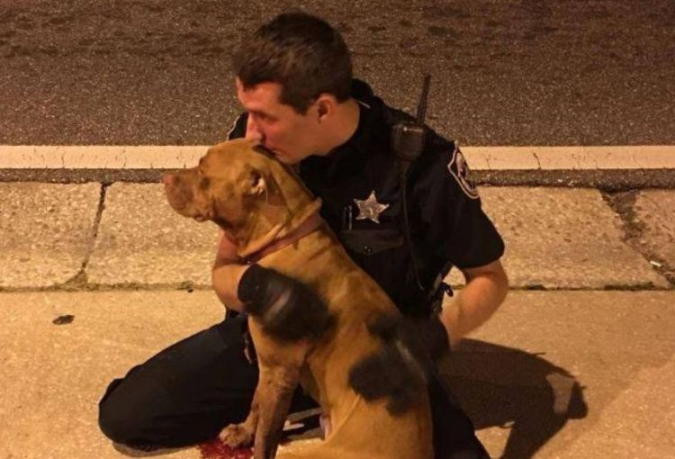 Cop and Pit Bull