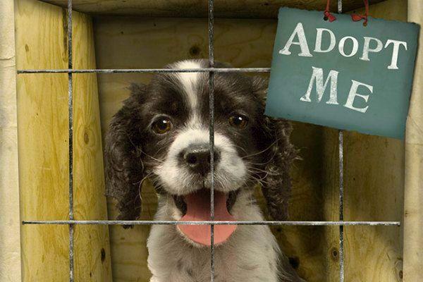 Image result for shelter dogs