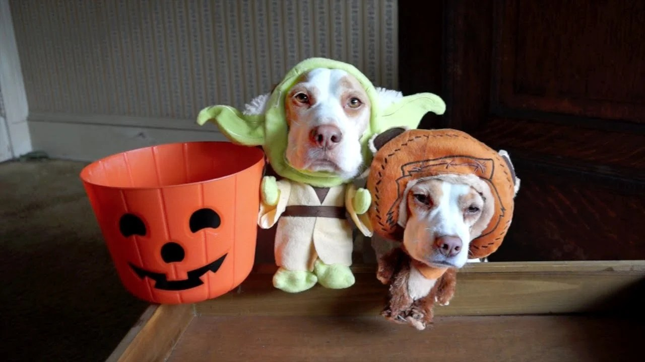 The Five Most Popular Dog Halloween Costumes Of 2017 Puppy Toob
