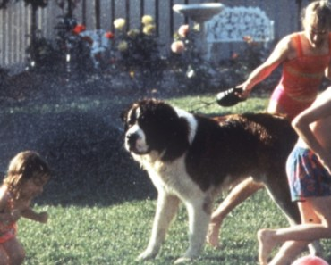 20 Funny Dog Chasing Scenes from Movies or TV
