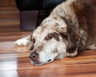 How to Keep Your Senior Dog's Brain Super Sharp