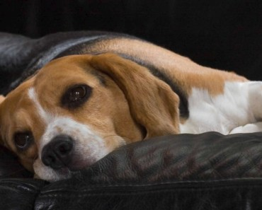 Should You be Worried About Skin Tags on Dogs?