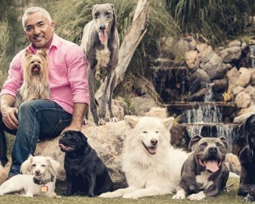 Cesar Millan Shares Advice on Watching TV with Your Dog