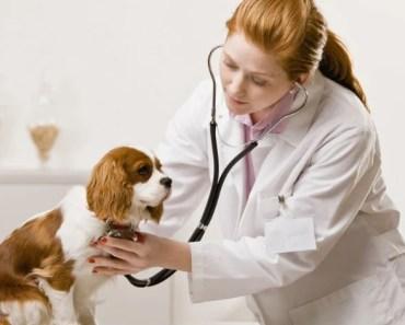 FDA Investigating Link Between Grain-Free Diet and Heart Disease in Dogs
