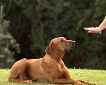 How to Socialize a Dog Through Dog Training Classes