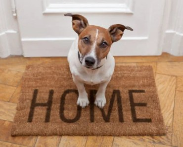 Five Steps to Take When Rehoming a Dog