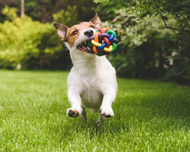 What To Consider When Buying Dog Toys For Your Pooch