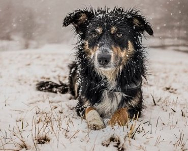 10 Essential Cold Weather Tips For Dogs