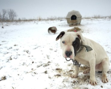 Dogfighting Victims Need Public and Political Action to Find Their Ways Home