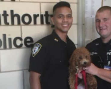 Airport Security rescue dog