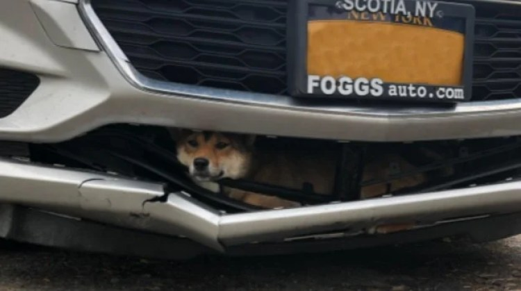 Bumper Dog