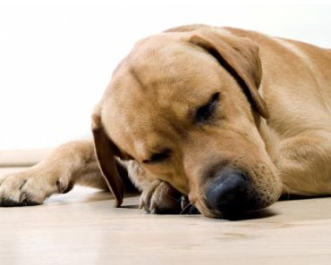 Foods That Can Help Your Dog's Arthritis Pain