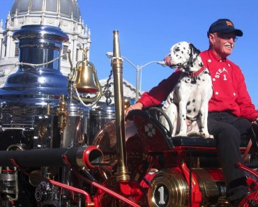 Important Tips for Dogs During Fire Season