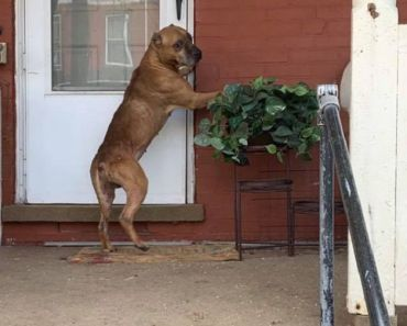 Dog Refuses to Leave Porch After Family Moves Away