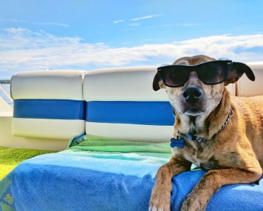 Five Dog Breeds Most Affected by The Heat