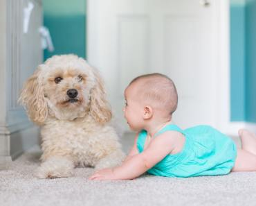 How Dogs Could Help Toddlers Learn Social-Emotional Skills